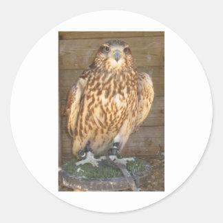 Owl Picture 1 Classic Round Sticker