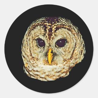 Owl Picture Classic Round Sticker