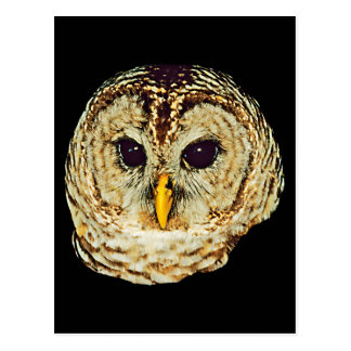 Owl Picture Postcard