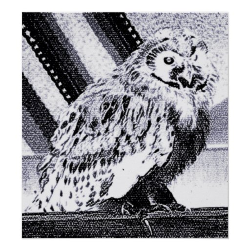Owl Picture Print
