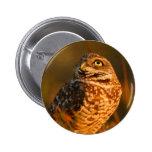 owl pins