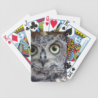 Owl playing cards
