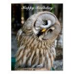 Owl portrait beautiful custom birthday card