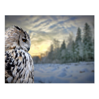 Owl portrait on winter forest background postcard