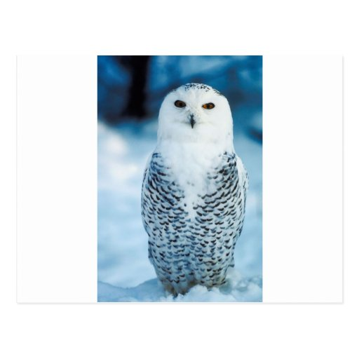 Owl Post Cards