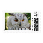 Owl postage stamps for sale !