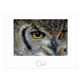 Owl Postcard Design