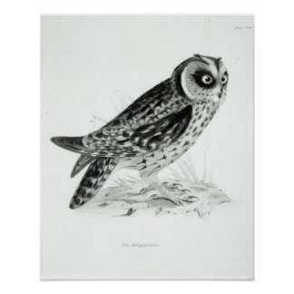 Owl Poster
