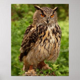 Owl Print/Poster Poster