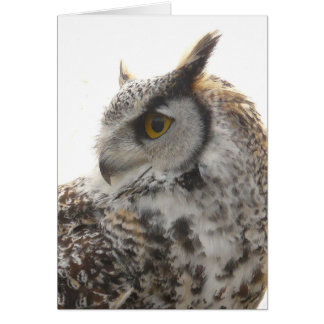 Owl Profile Portrait Photo Card