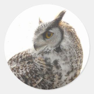 Owl Profile Portrait Photo Classic Round Sticker