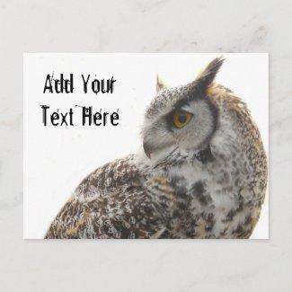 Owl Profile Portrait Photo postcard