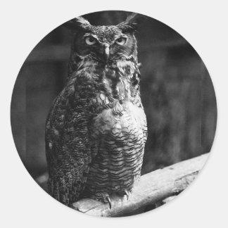 Owl - Screech Sticker