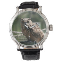 Owl sitting green background looking watch