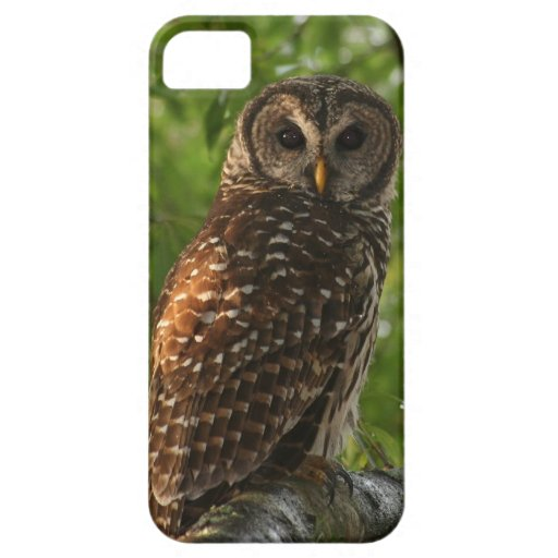 owl sitting in tree iphone 5 case