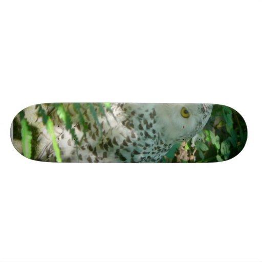 Owl Skate Boards