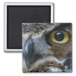 Owl Square Magnet Refrigerator Magnets