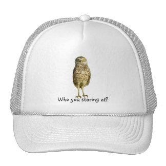 Owl staring at Hat