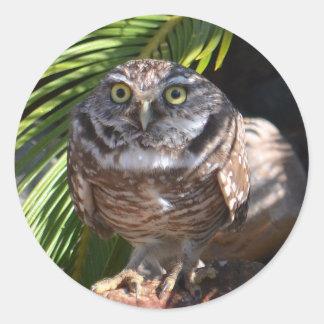 owl stickers, round classic round sticker