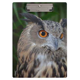 owl turning to the right head view clipboards
