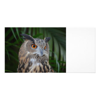 owl turning to the right head view photo card