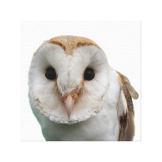 Owl wild animal peekaboo photo canvas print