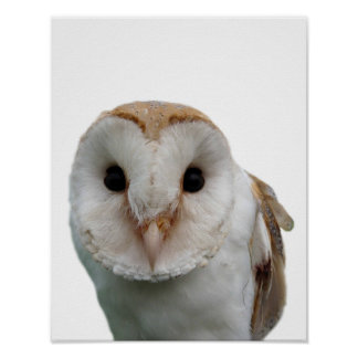 Owl wild animal photo peekaboo kids room poster