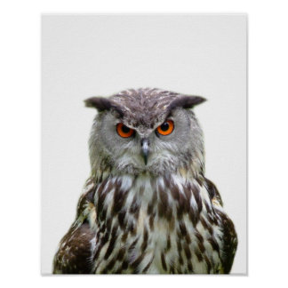 Owl wild forest animal photo peekaboo nursery poster