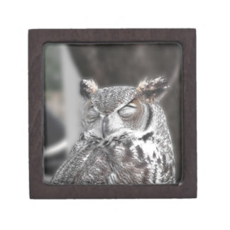 Owl with eyes closed sleeping during the day keepsake box