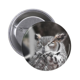 Owl with eyes closed sleeping during the day pinback button