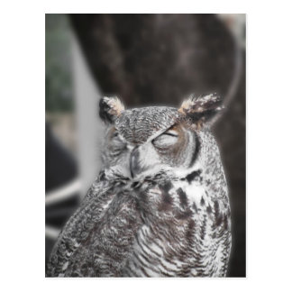 Owl with eyes closed sleeping during the day postcard