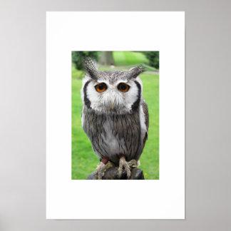 Owl with orange eyes poster