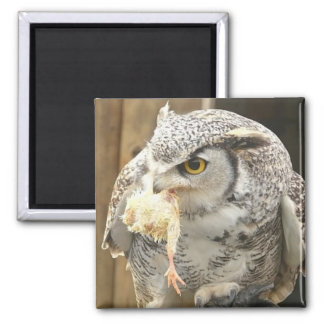 Owl with Prey 2 Inch Square Magnet