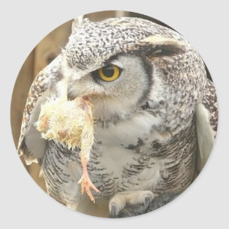 Owl with Prey Color Photo Classic Round Sticker