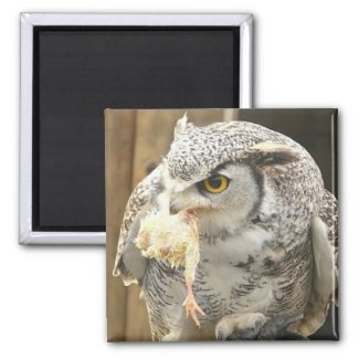 Owl with Prey magnet