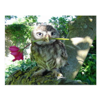 Owl with rose postcard