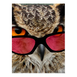 owl with spectacles funny hilarious postcard
