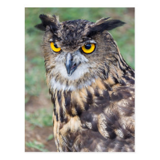 owl with yellow eyes postcard