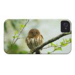 Owlet agarrado del pigmy que se encarama en rama d iPhone 4 cárcasa
