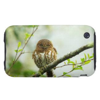 Owlet agarrado del pigmy que se encarama en rama tough iPhone 3 fundas