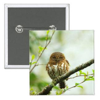Owlet agarrado del pigmy que se encarama en rama pin cuadrado