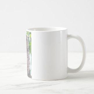 Owlet de risa taza básica blanca