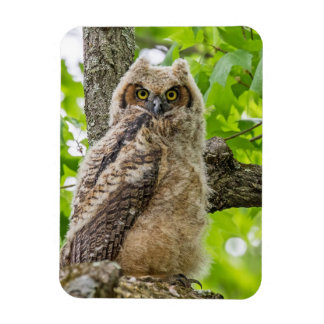 Owlet Magnet