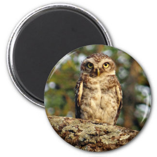 Owlet manchado imán redondo 5 cm