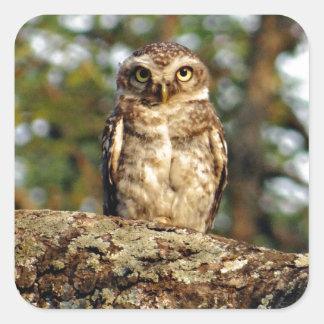 Owlet manchado calcomania cuadradas personalizada