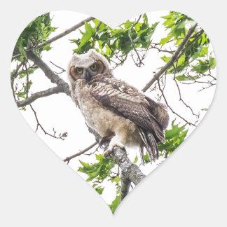Owlet On A Maple Tree Branch Heart Sticker