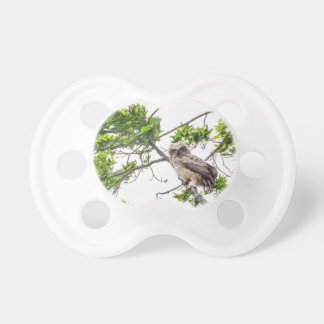 Owlet On A Maple Tree Branch Pacifier