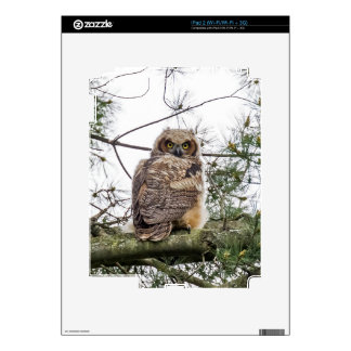 Owlet On A Pine Branch Decals For The iPad 2