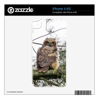 Owlet On A Pine Branch Decals For The iPhone 4