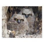 Owlets Arte Con Fotos